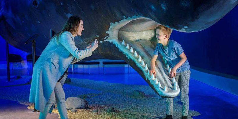 666135_Whales-of-Iceland-museum-Reykjavik
